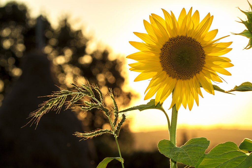 Sunshine and nature feed the soul